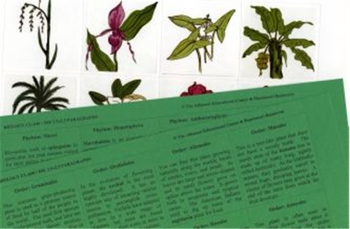 PLANTAE Set of 23 Pictures & Paragraphs only ● CL-640-D