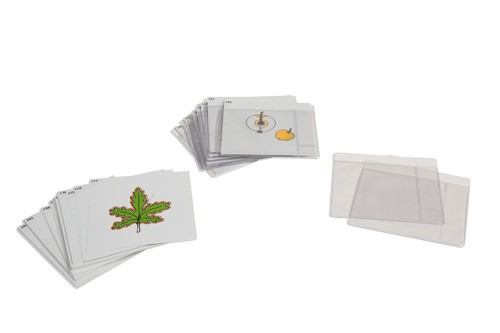 Third Set of Botany Cards/019700       NH-216         ■SOLD OUT■
