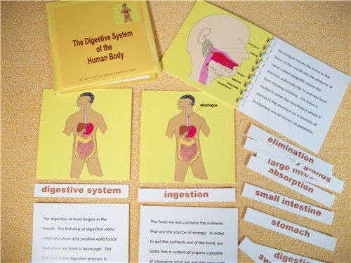DIGESTIVE SYSTEM NOMENCLATURE EXERCISE ● SC-A44   DISCOUNTED