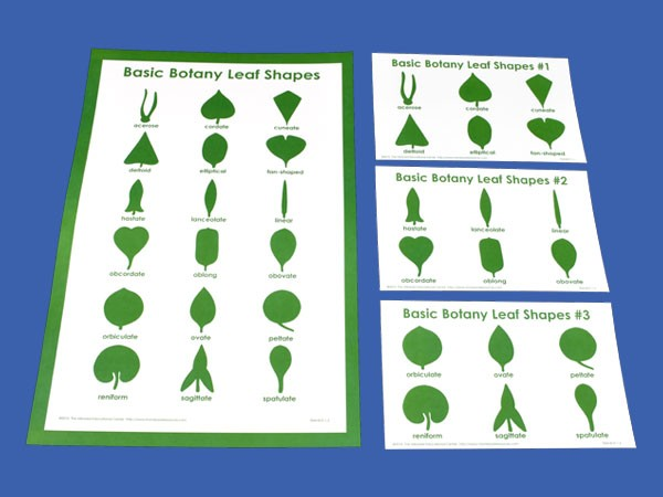Botany Control Charts & Wall Chart for the Leaf Shapes Templates ● TEM-Bot-Charts