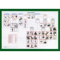 PLANT CLASSIFICATION CHART/48 PICS ● CL-500