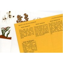 FUNGI Set of 5 Pictures & Paragraphs only ● CL-630-D