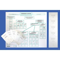 MUTE WORKING CHART, GUIDE & ACTIVITY BOOKLETS - PLANTAE ● CL-640-A-B-C