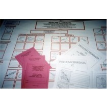 WORK CHART & BOOKLETS - Chordata ● CL-651-A-B-C