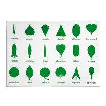 Control Chart for the Leaf Shapes/ 0041C1    NH-211.2        ♣AVAILABLE  qty 2♣