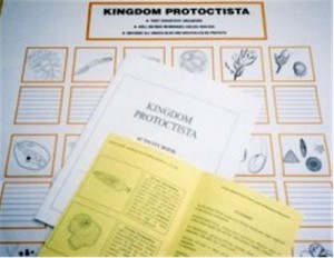 WORK CHART & BOOKLETS  - Protoctista ● CL-620-A-B-C