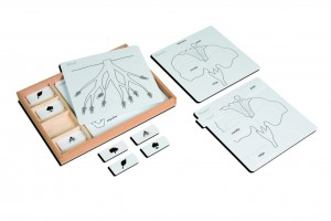 Botany Puzzle Activity Set/020201   NH-212.4   ■SOLD OUT■QUOTE REQUIRED■